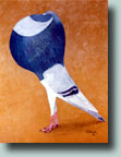 Norwich Cropper--Pigeon Painting by Larry Holbrook